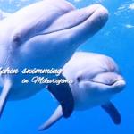 【平日女性限定❤︎】御蔵島のドルフィンスイムツアーのお得情報