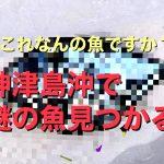 「これなんの魚ですか?」神津島沖で獲れた謎の魚がTwitterで話題になっている件