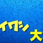 【伊豆大島】イワシの群れが大量発生!圧巻の光景は今しか見れない貴重な映像