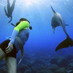 御蔵島で野生のイルカと泳ぐドルフィンスイム子供も楽しむ事が出来るツアー
