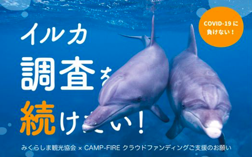 【イルカ調査を続けたい】イルカの個体識別調査のクラウドファンディングが開始される